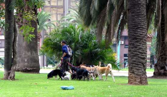 dog-sitters in Buenos Aires
