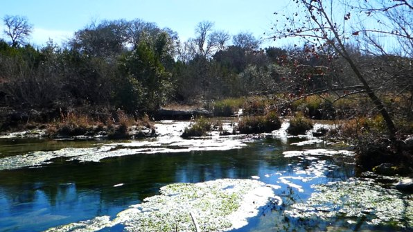 Springs of the Guadelupe north of Hunt Texas winter 2017